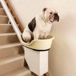 Stairlifts for elderly dogs